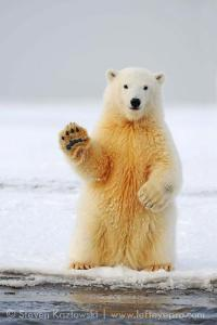 A polar bear.  One of the thousands that you are personally responsible for murdering.