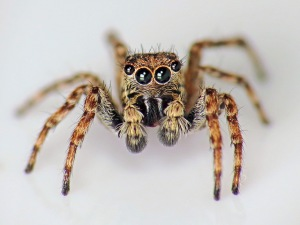 America's first Arachnaut was tragically killed during training when it was found in the bathtub of one of the lead engineers. Picture by Martin Cooper via Flickr.
